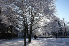 dahlem-winter-schnee-snow