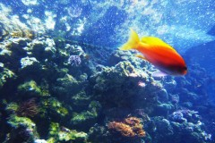 fisch-orange-aquarium-berlin-fish