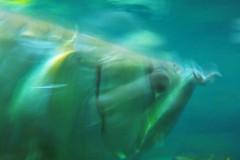 fisch-verwischt-aquarium-fish-blur