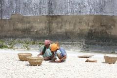 indien-cochin-ingwerlese-ginger