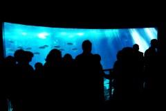 ozenarium-lissabon-menschen-aquarium-fische