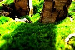 pflanze-moos-moss-glade