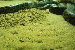 reptilien-boa-schlangen-snake-spoor
