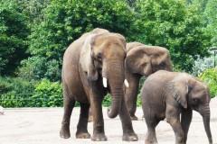 saeuger-elefantenfamilie-elephant-family