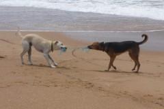 saeuger-hund-spielen-dog-play