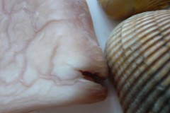 seife-muschel-fisch-soap-fish