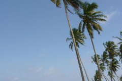 strand-goa-beach-palms