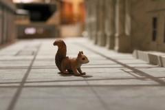 marktplatz-zentrum-squirrel-eichhörnchen-oachkatzl