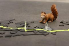 radweg-ruhrpott-squirrel-eichhörnchen-oachkatzl