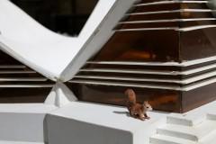 berlin-squirrel-eichhörnchen-oachkatzl