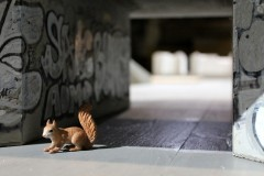 graffiti-tunnel-squirrel-eichhörnchen-oachkatzl
