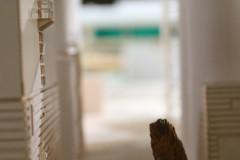 werksgelände-squirrel-eichhörnchen-oachkatzl-premises