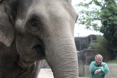 zeit-pfleger-sad-elephant-hagenbeck