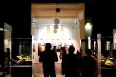 naturkundemuseum-halle-vitrinen-besucher