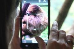 faul-faultier-smartphone