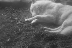 wolf-nebel-schlaf-nachtruhe