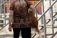 rumänien-bukarest-dog-to-go