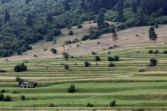 rumänien-zernest-zarnesti-felder-traktor-feldarbeit-ernte