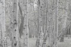 birkenwald-herbst-pillen-wirken-bald-kippenberger