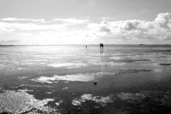 wattwanderung-wangerooge-mudflat hiking tour-north sea-nordsee